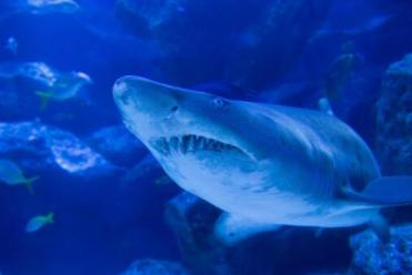 【怖】人の顔したサメが発見される