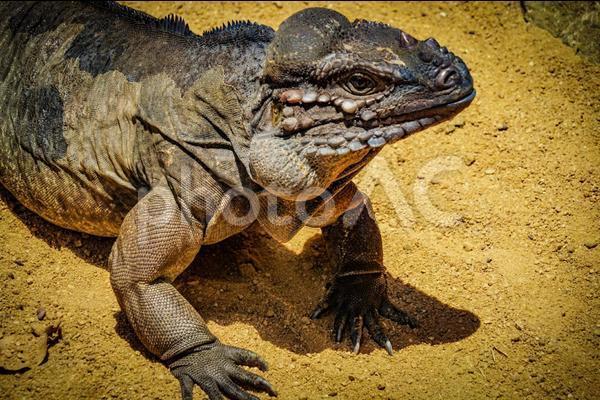 【謎が解けた!】なぜ恐竜は小型か大型しかいないのか?サイエンス誌で論文