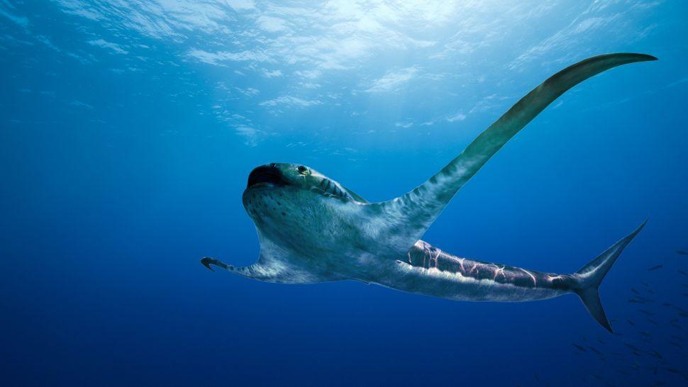 【古生物学】翼のような胸びれ持つ「イーグルシャーク」 太古の新種ザメ発見