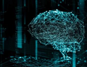 人間の脳を他の霊長類よりも発達させている遺伝子が特定される