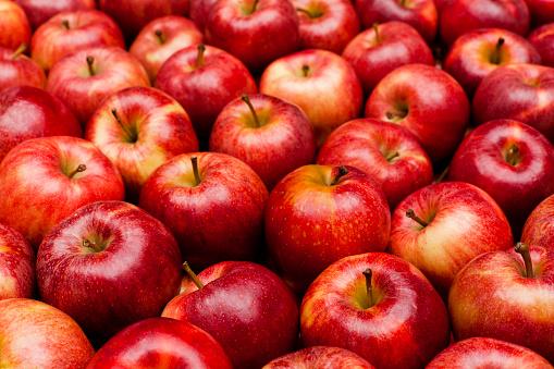 りんご娘の平均身長wwwwwwwwwwwwwwwwwwwwwwww
