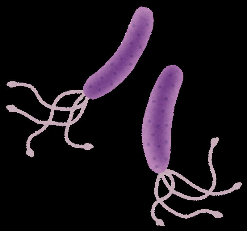 【医学】ピロリ菌が胃に感染し続ける仕組みを解明 阪大など