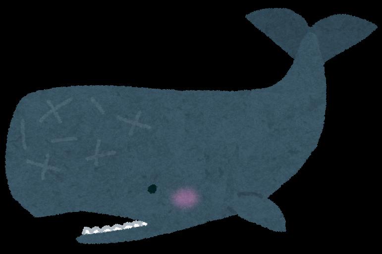 「クジラ語」は解読できるか? 大型研究プロジェクトが始動